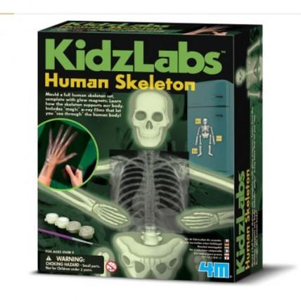 Glow Human Skeleton 1/6/24