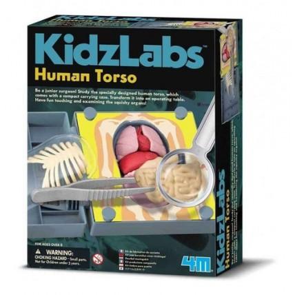 Kidz Labs Torso Humano